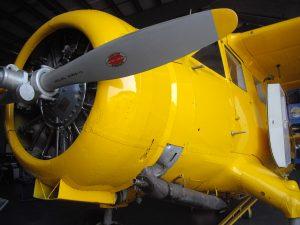 yellow norseman